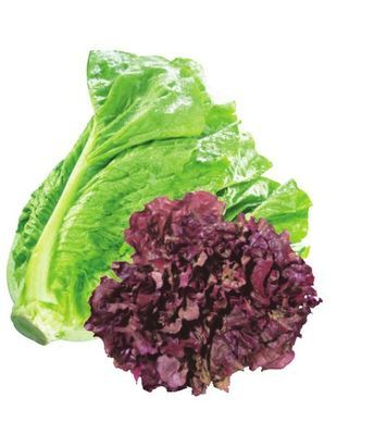 ROMAINE LETTUCE RED OR GREEN LEAF LETTUCE