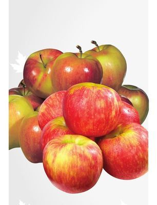 Extra Large Honeycrisp or Ambrosia Apples