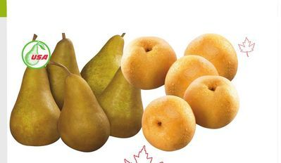 PERFECT PEAR BOSC PEARS