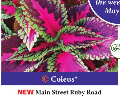 Sheridan Nurseries Weekly Ad for Cambridge this week (May 2
