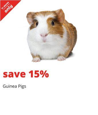 Long Haired Hamster Petsmart 50
