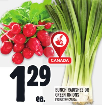 BUNCH RADISHES OR GREEN ONIONS