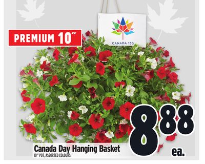 Canada Day Hanging Basket