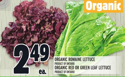 ORGANIC ROMAINE LETTUCE OR ORGANIC RED OR GREEN LEAF LETTUCE