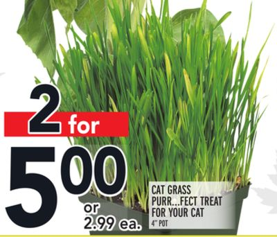 CAT GRASS PURR…FECT TREAT FOR YOUR CAT