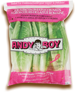 COEURS DE LAITUE ROMAINE ANDY BOY | ANDY BOY ROMAINE HEARTS