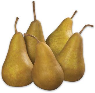 Anjou or Bosc Pears