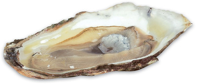 FRESH CHOICE MALPEQUE OYSTERS