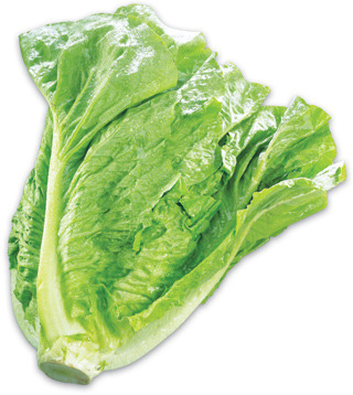 Romaine Lettuce or Extra Large Beefsteak Tomatoes