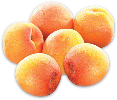EXTRA LARGE APRICOTS