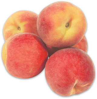 EXTRA LARGE PRIMA GATTIE PEACHES