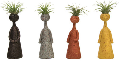 LIVE TRENDS MR. OR MRS. AIR PLANT OR THINKERS AIR PLANT