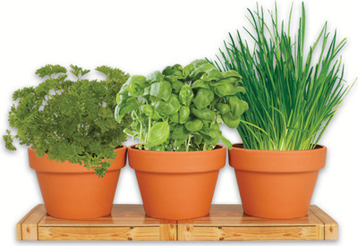 HERB TRIO GROW KIT