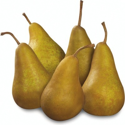 BARTLETT PEARS PRODUCT OF U.S.A., EXTRA FANCY GRADE BOSC PEARS PRODUCT OF ONTARIO, CANADA EXTRA FANCY GRADE