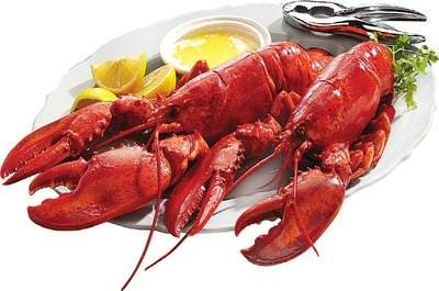 FRESH COOKED CANADIAN LOBSTER