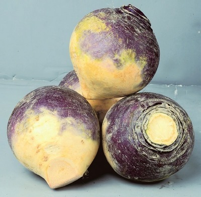 ASSORTED ONTARIO SQUASHES OR RUTABAGAS